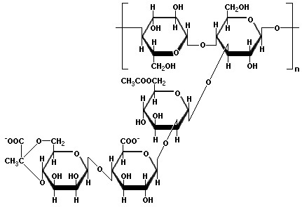 Xanthan Gum Sythetic Hybrids Natural Polymers